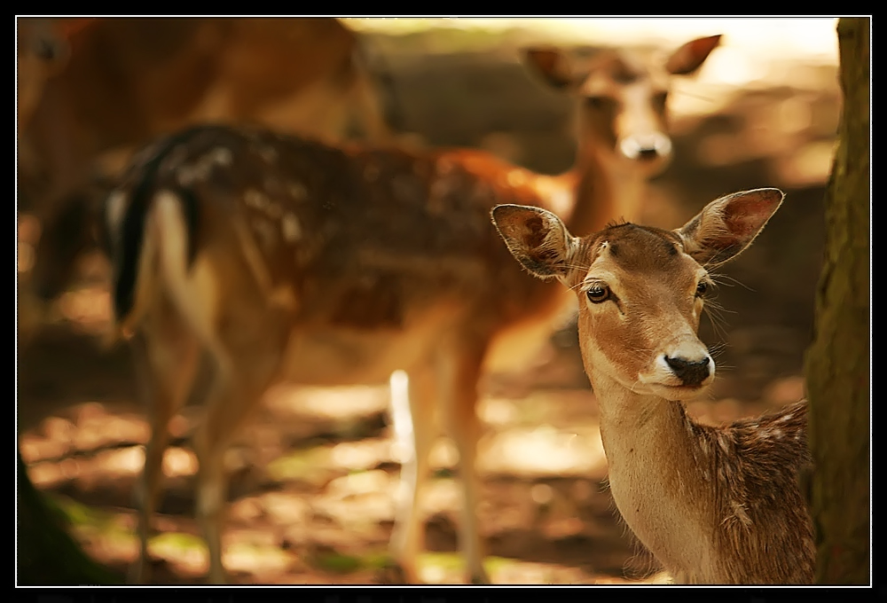enne Besuch im Zoo - ohohohoh