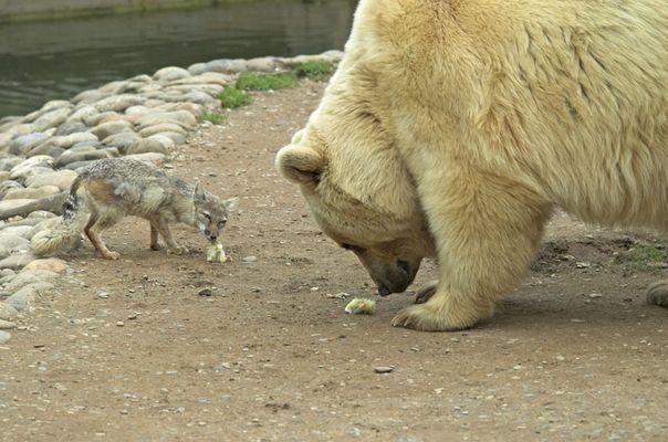 enne Besuch im Zoo...o..o...o...ohh_2