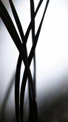 entangled III