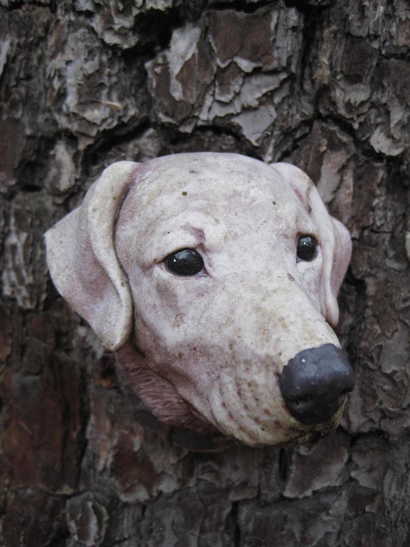 ENTDECKUNG !!!! Hunde wachsen an Bäumen !!! Hier ist der Beweis !!!
