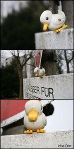 Ente auf Reisen - Teil zwei...