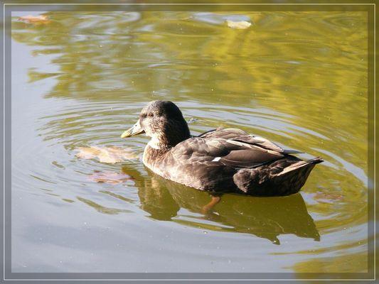 Ente genießt die letzten Sonnenstrahlen