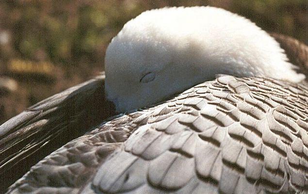 Ente oder Gans? Auf jedem Fall, ein Vogeltier ;-)