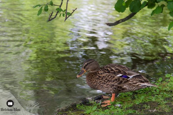 Ente Quack :D