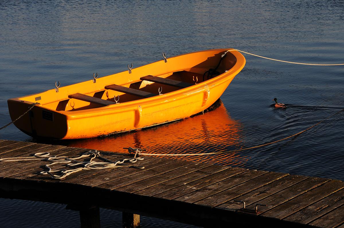 Ente und gelbes Boot