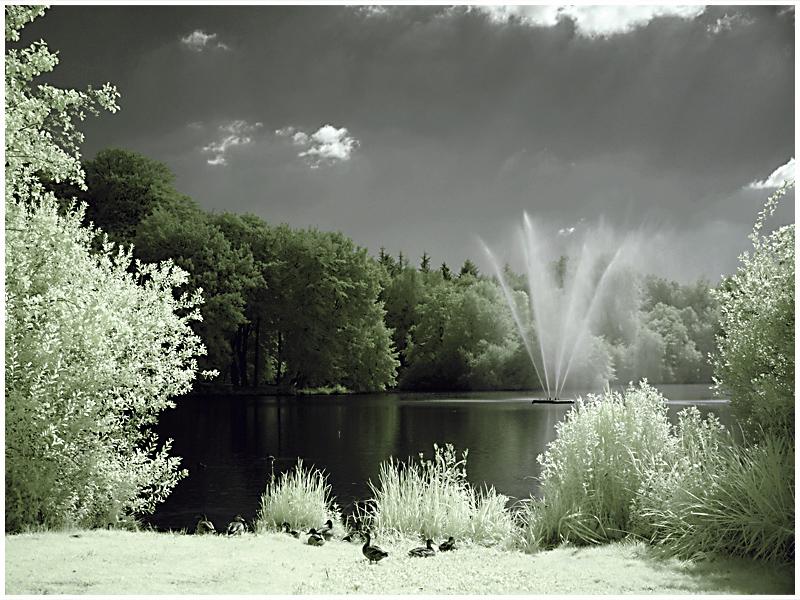 Enten am Ellernteich (Schlosspark Rastede)