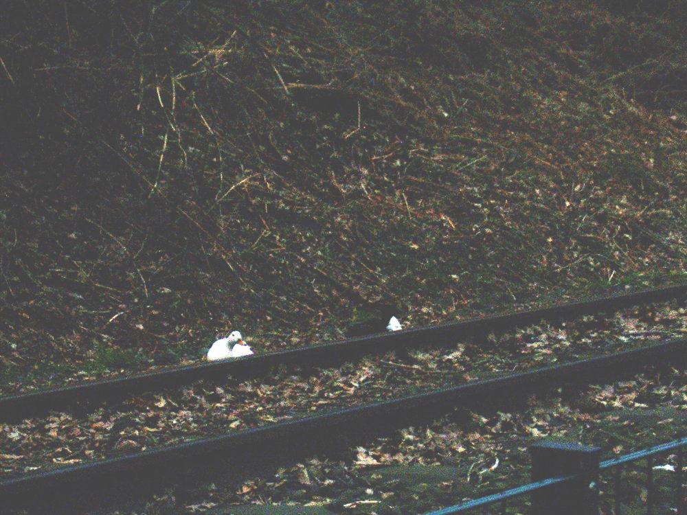 Enten auf der Ruhrtalbahn