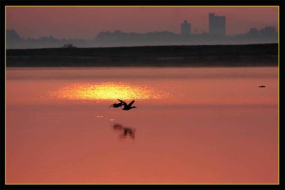 Enten im Morgenlicht