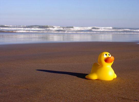 Enten zieht es halt immer zum Wasser