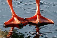 Entenfüsse die zweite