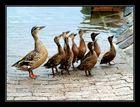 Entenmutti und die Kinder