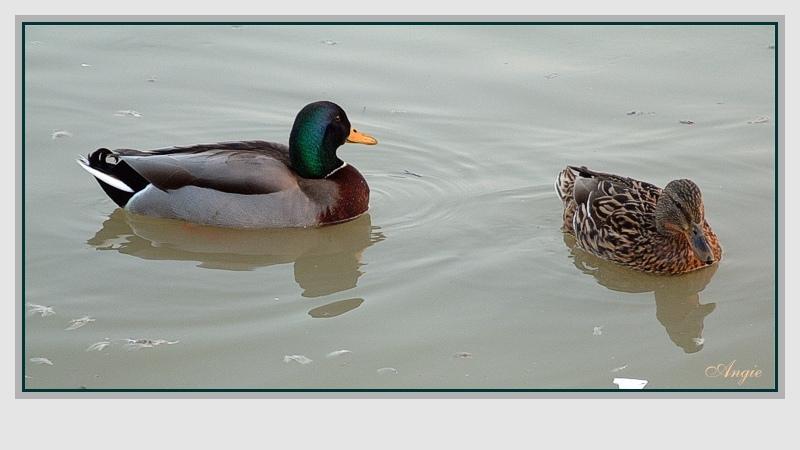 Entenpaar, für Dirk N.
