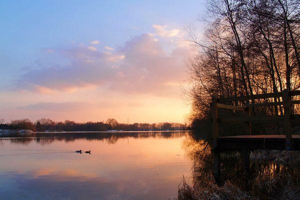 Entenpärchen auf dem Quendorfer See