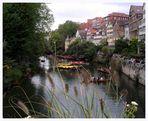 Entenrennen in Tübingen