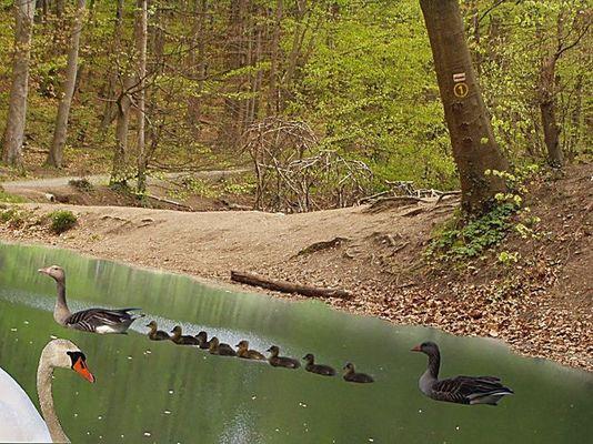 Entenwaldsee