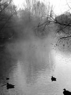 Entenweiher an der Ruhr in Mülheim