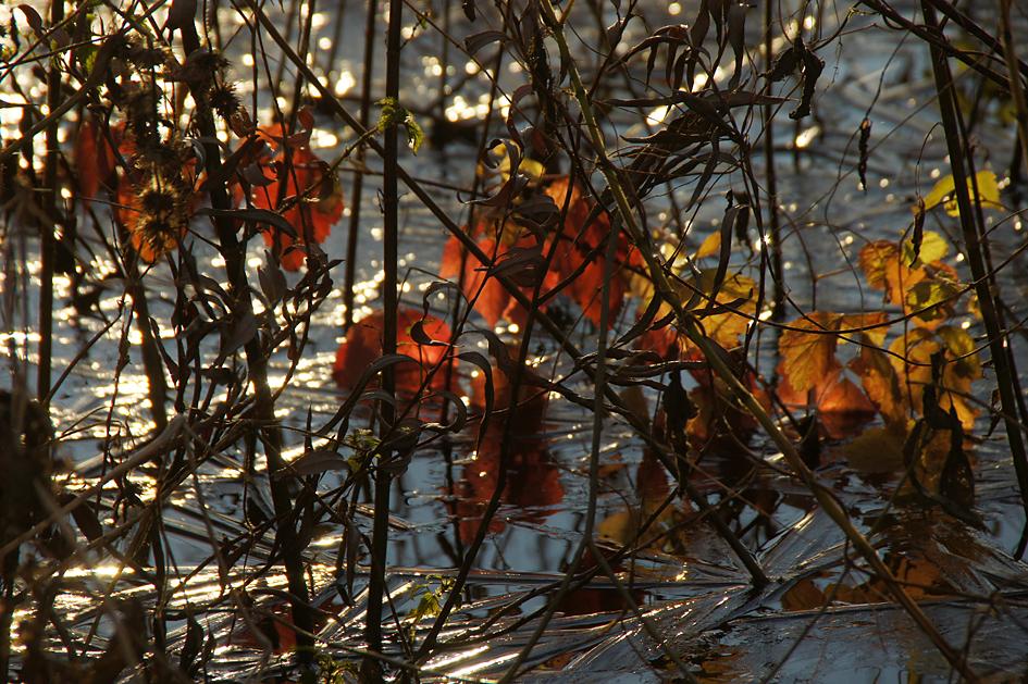 Entlang der Havel, 25.11.10 – 07