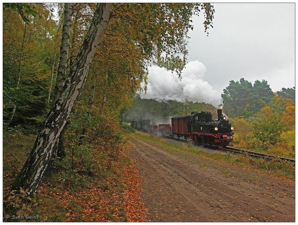 Entlang eines Waldwegs in der Selliner Heide an einem trüben Herbsttag