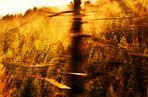 Entlang fahren am Licht(en) Wald
