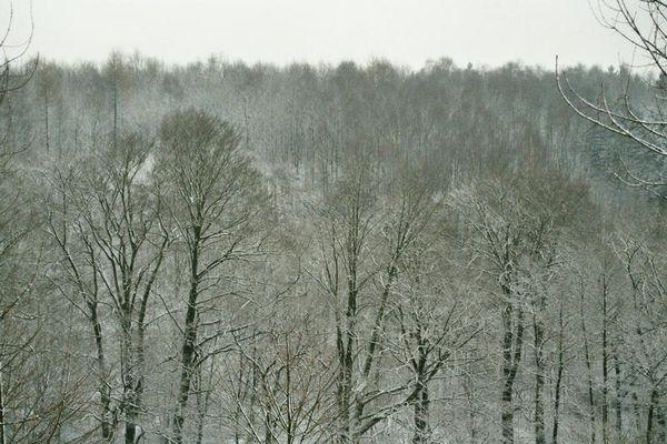 Entlich Schnee