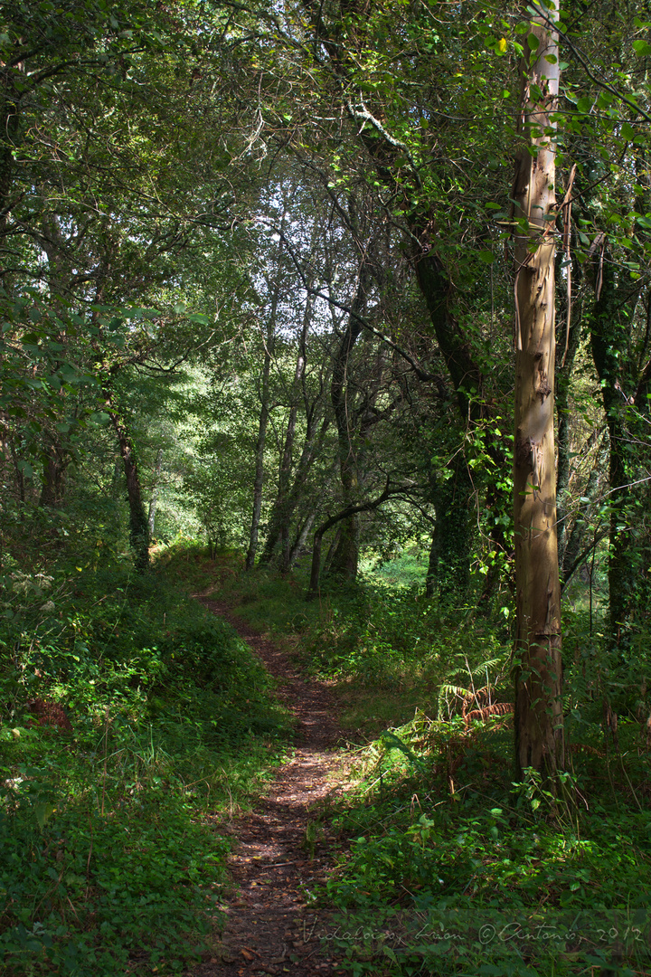 Entorno del río Sar en Vidaloiso
