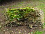 entourés d'arbres, le rocher fait du mimétisme