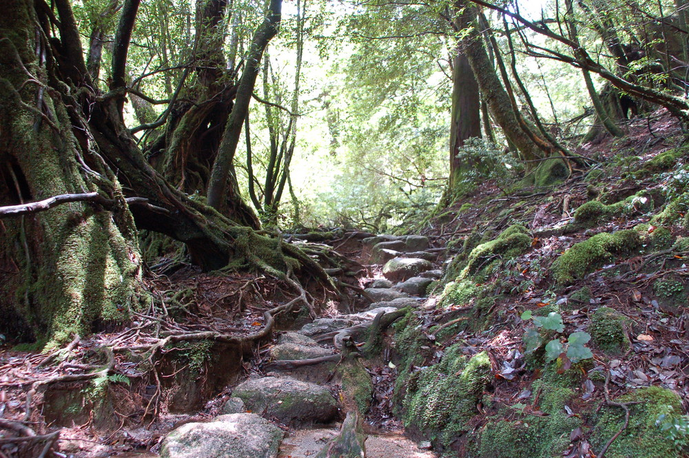 Entrada al bosque magnifico