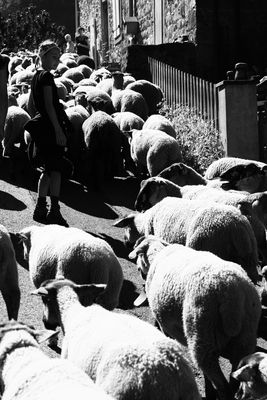 Entre des moutons