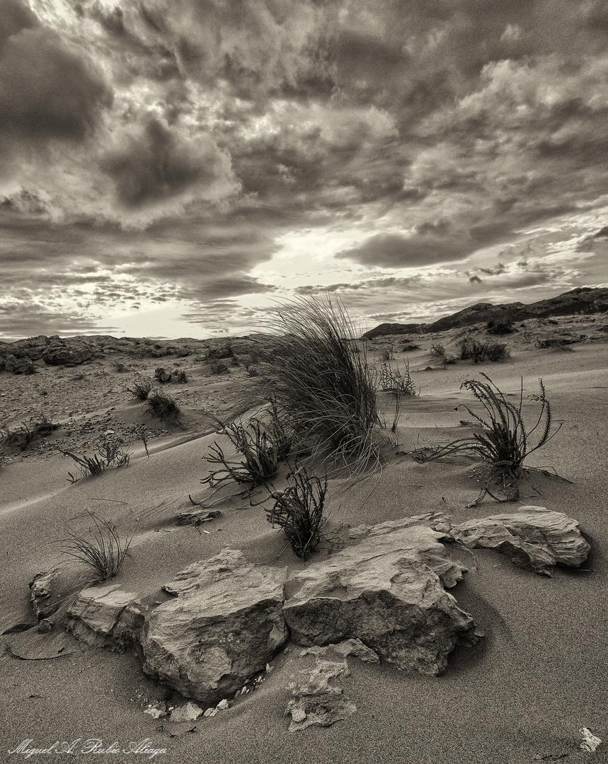 Entre dunas