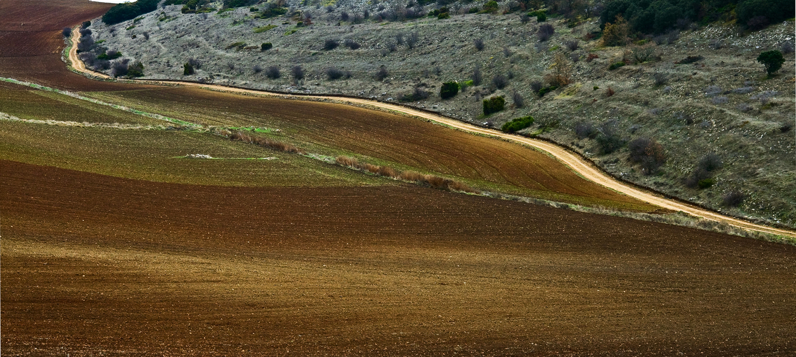 Entre el monte y el sembrado