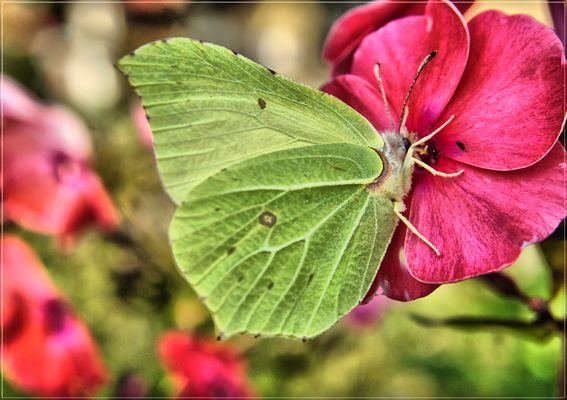 entre feuille et papillon pas grand différence juste leur poits commun la légèreté