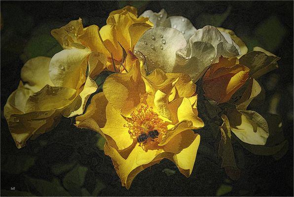 ...entre flores amarillas...