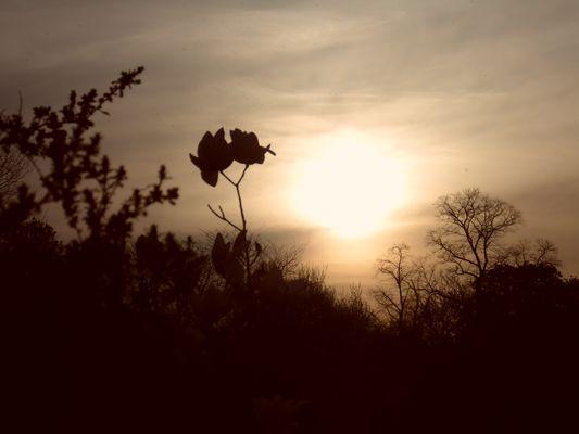 entre flores y sombras
