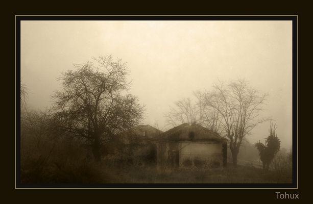 Entre la niebla 02