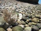 Entre las piedras ....