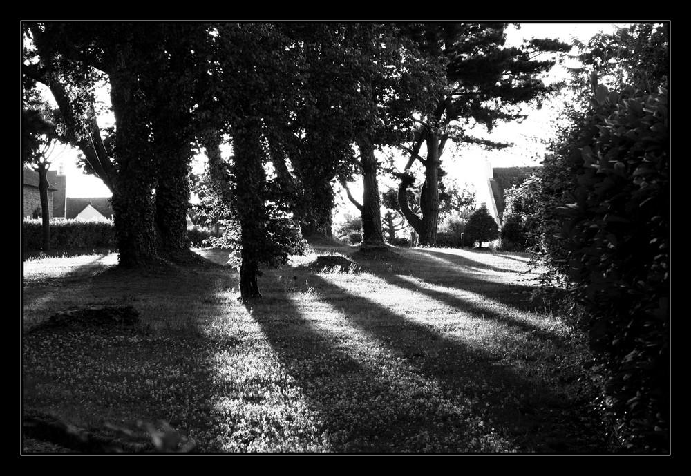 Entre les arbres