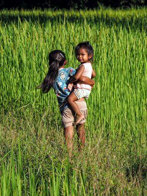 Entre les rizières