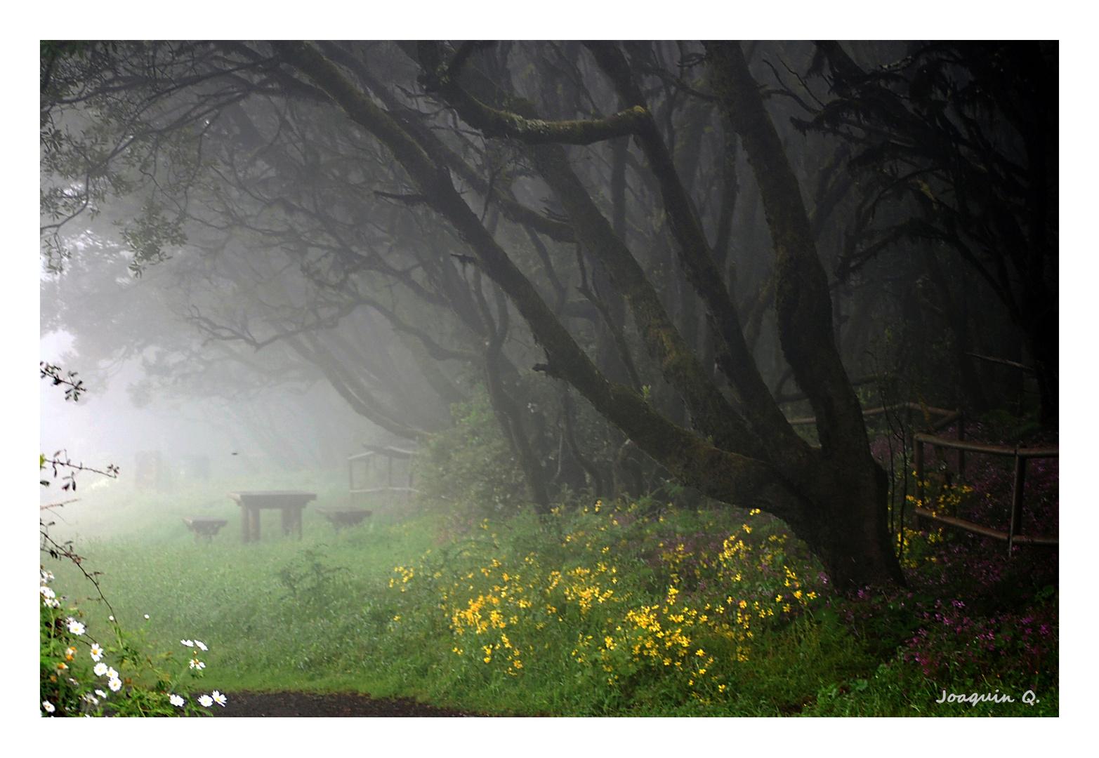 Entre niebla (02)