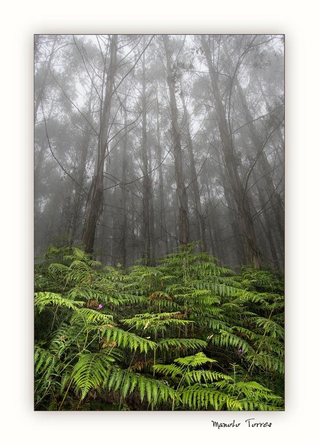 Entre niebla 02 (para O. Blacky)