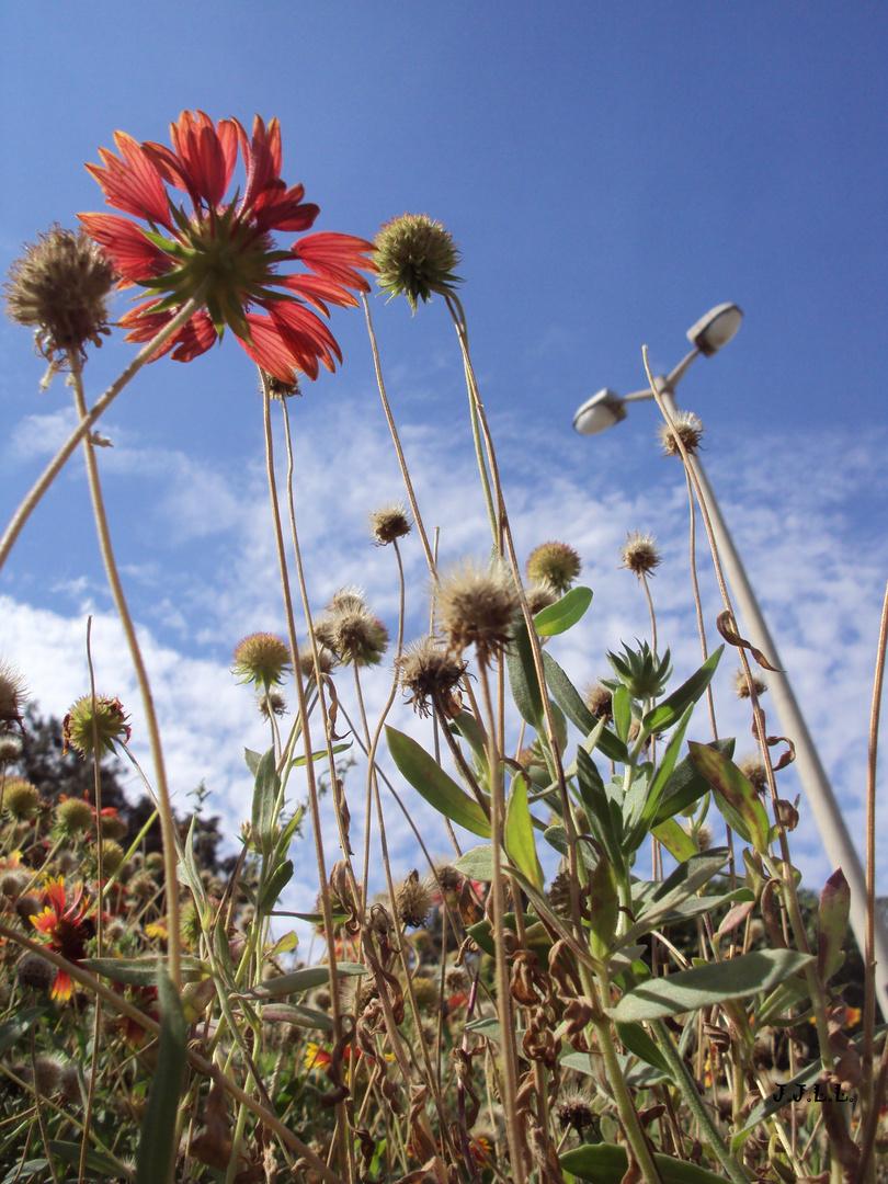 Entre postes y flores