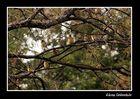 Entre ramas