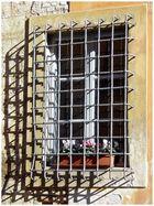 Entre rejas (Pisa)