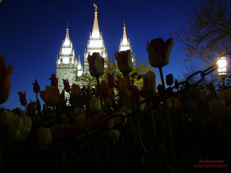 Entre Tulipanes!!