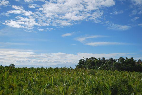 entre vert palm et bleu ciel