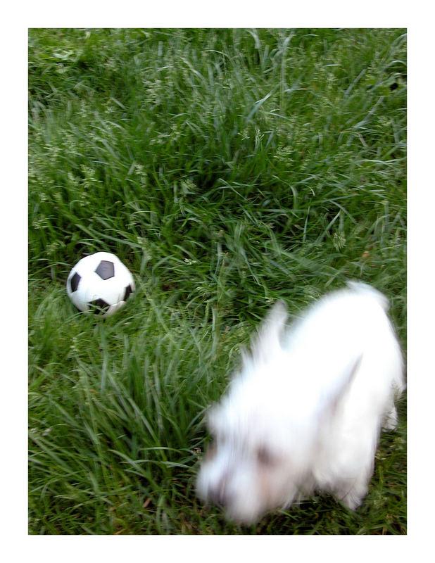 entweder Hund zu schnell oder Kamera zu langsam..