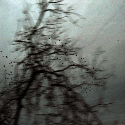 envolée d'oiseaux autour de l'arbre