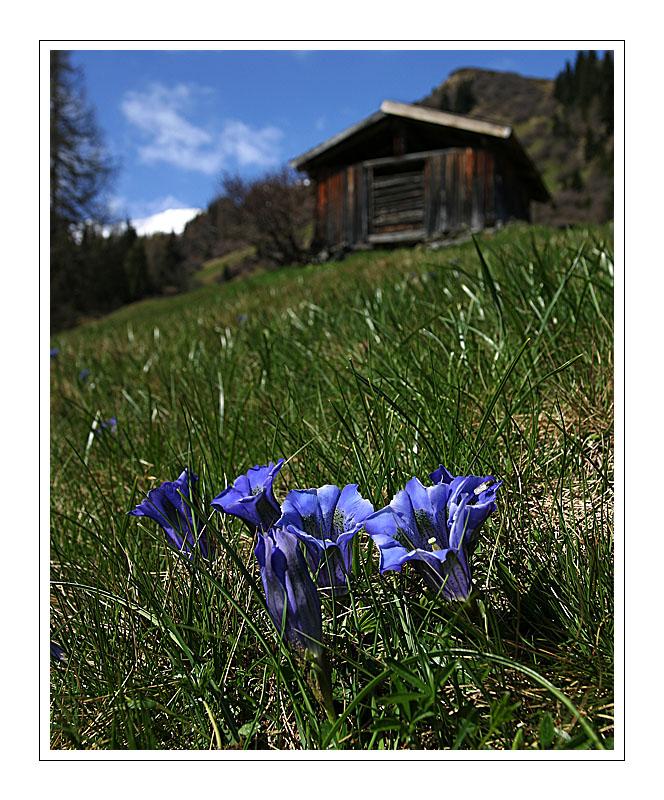 Enzian & Wiese & Hütte