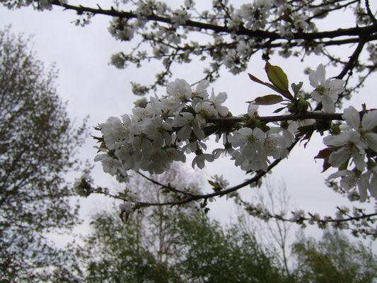 Epanouissement floral