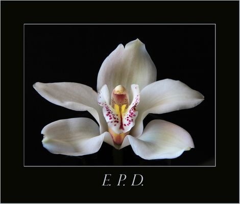 E.P.D.