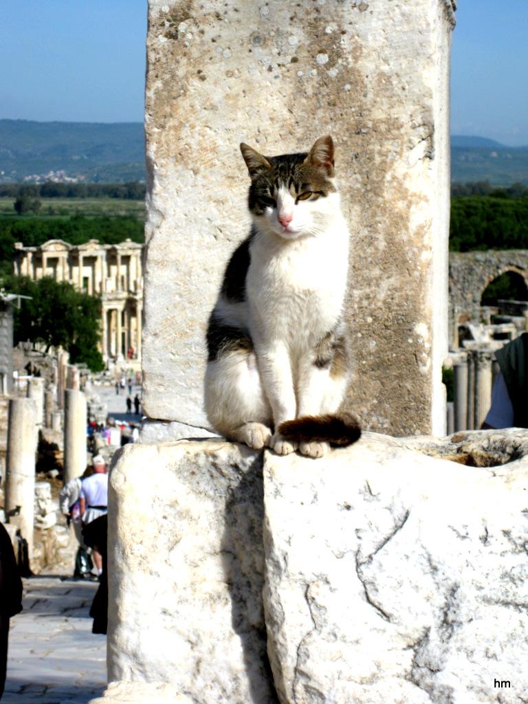 Ephesus- Museumskatze